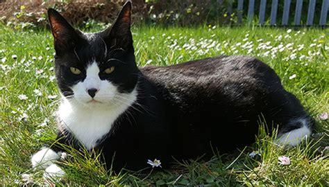 Cat lovers furious over Auckland Council's cat cull plans