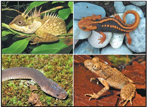 the lizard newt frog and snake were among more than 150